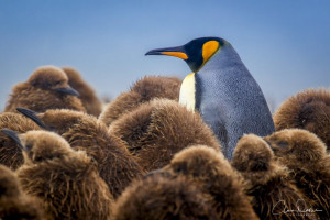 4 tips on differentiating from your competition